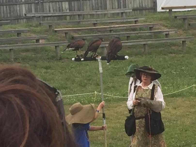 Falconer with Harris hawks